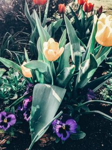 zahrada kytky 3