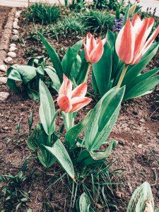 zahrada kytky 2